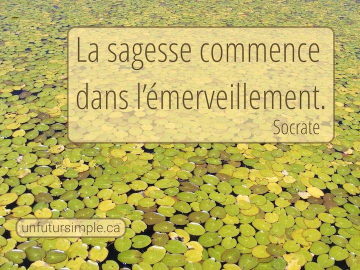 Citation sur la sagesse de Socrate : La sagesse commence dans l'émerveillement. Arrière-plan : Nénuphars jaunes et verts en plongée.