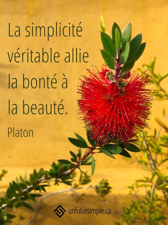 """citation de Platon: La simplicité véritable allie la bonté à la beauté. Arrière-plan : Fleur """"bottlebrush"""" sur fond de mur jaune;"""