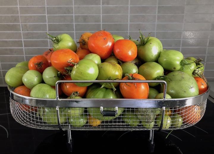 Tomates rouges et vertes dans un panier