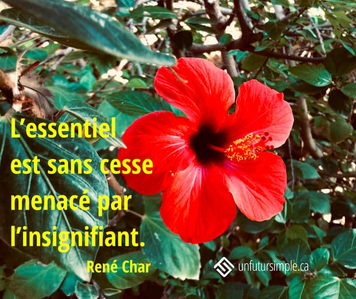 Citation de René Char: L'essentiel est sans cesse menacé par l'insignifiant. Fleur d'hibiscus rouge sur feuillage vert foncé.