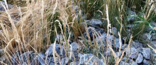 Grandes herbes et roches en été