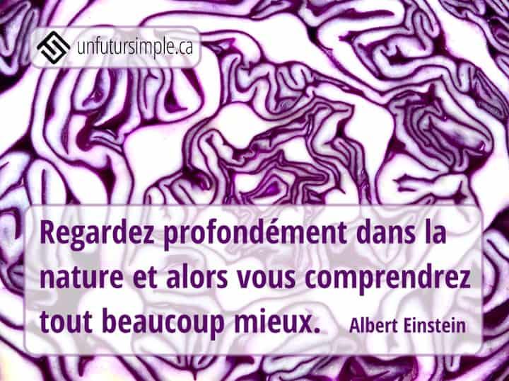 Citation de Einstein: Regardez profondément dans la nature et alors vous comprendrez tout beaucoup mieux. Gros plan du détail d'un chou mauve.