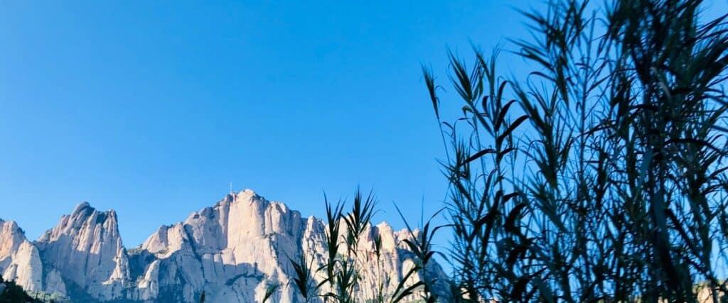 Vue de Montserrat avec longues herbes noires à l'avant-plan.