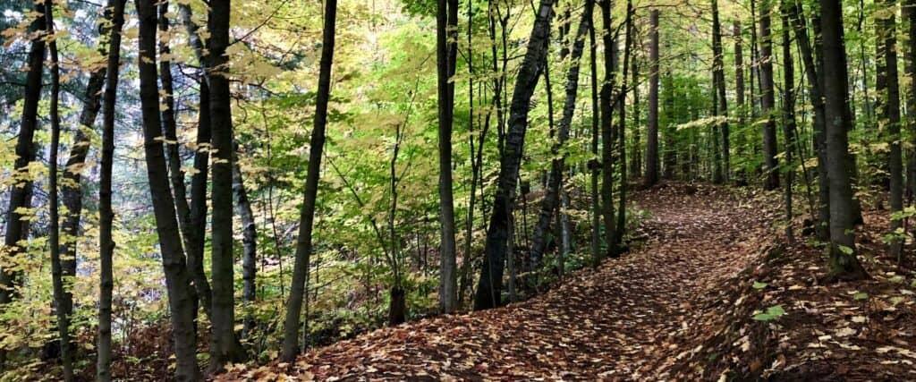 Sentier dans un boisé à l'automne