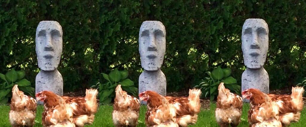 Poules devant une réplique de statue de l'île de Pâques