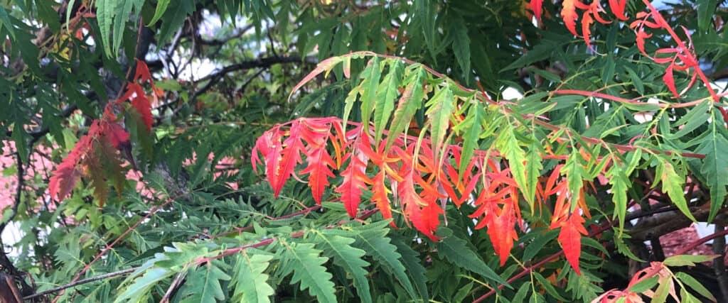 Pointes de feuilles rouges sur un fond de verdure.