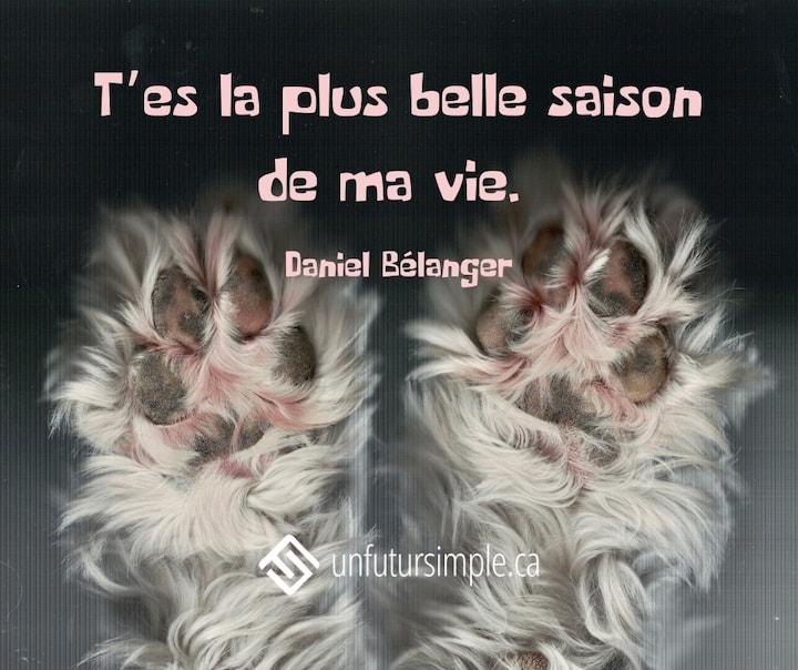 Citation de Daniel Bélanger: T'es la plus belle saison de ma vie. Gros plan sur les coussins des pattes poilues d'un chien.